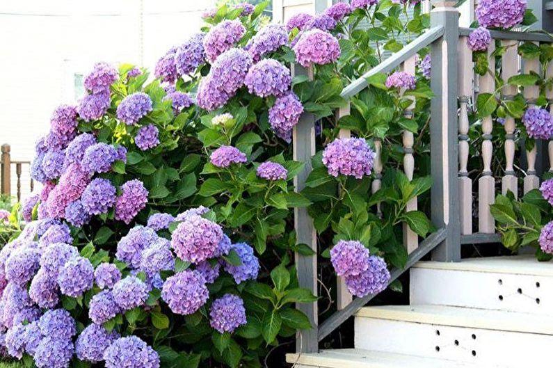 Цветы для дачи - Особенности