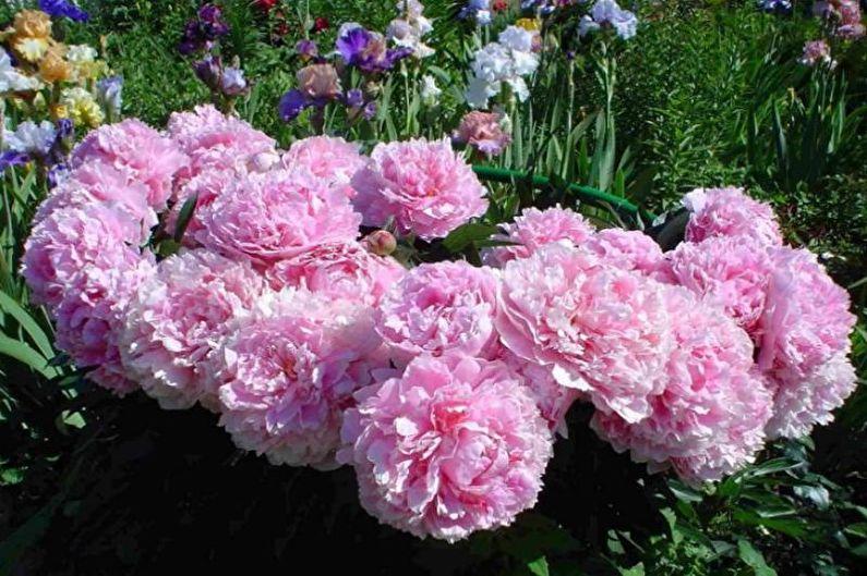 Цветы для дачи - Виды