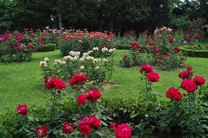 Цветы для дачи - Высокие прямостоячие растения