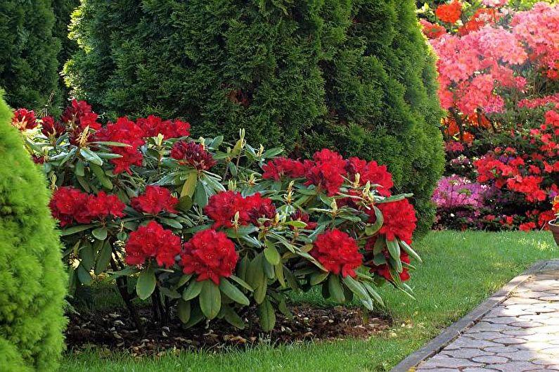 Цветы для дачи - Многолетние кустарники