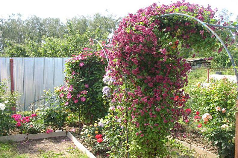 Цветы для дачи - Вьюнковые лианы