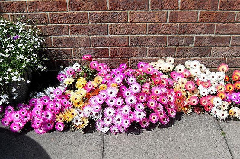 Цветы для дачи - Ковровые растения
