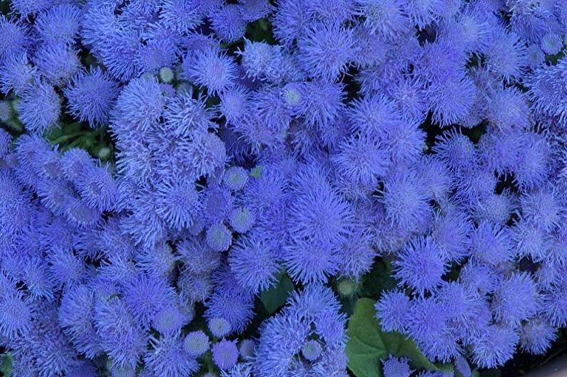 Агератум - Синий букет