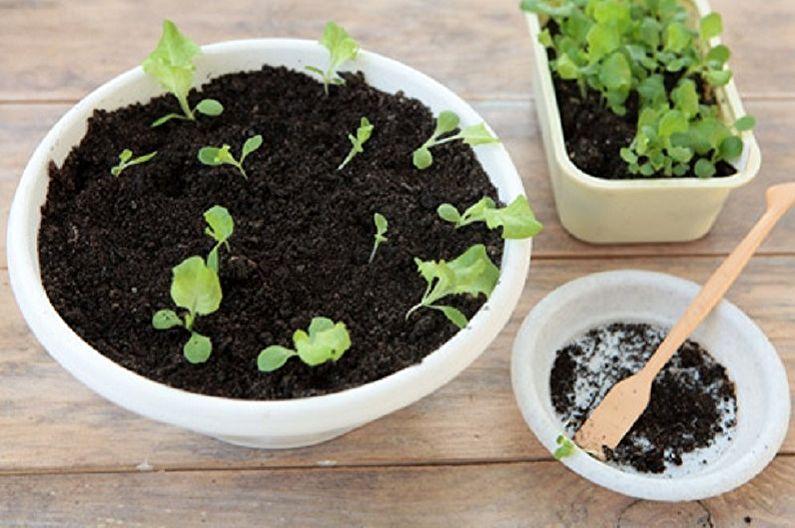 Размножение агератума семенами