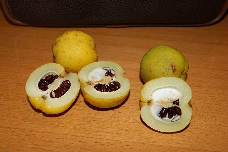 Размножение айвы японской семенами