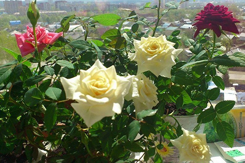 Домашняя роза дерево - TheFlowers