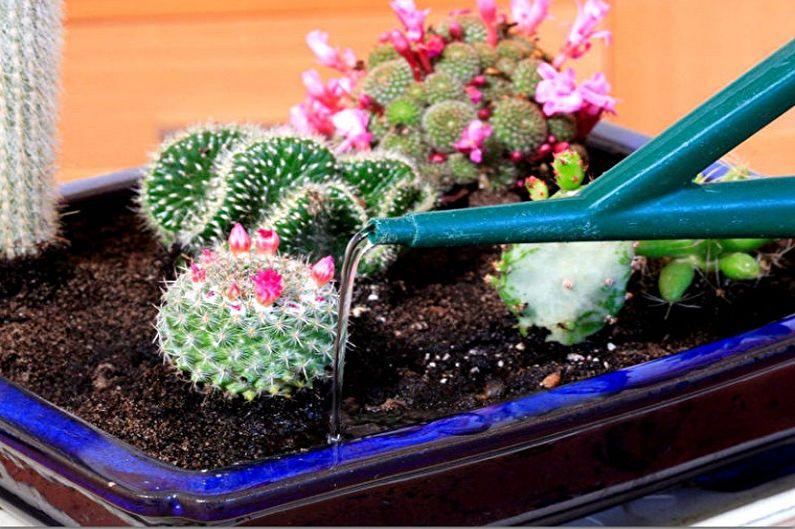 Домашние кактусы - Полив и влажность
