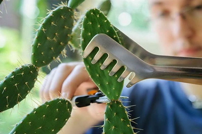 Домашние кактусы - Пересадка и размножение