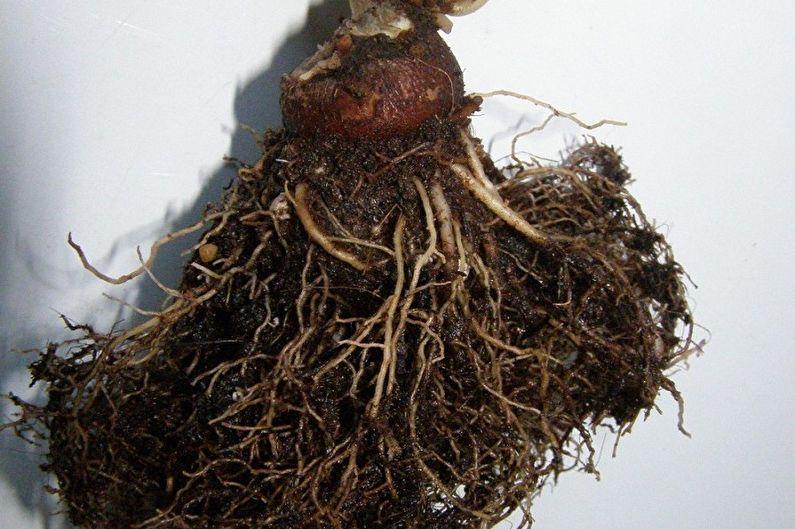 Домашние кактусы - Борьба с вредителями и заболеваниями