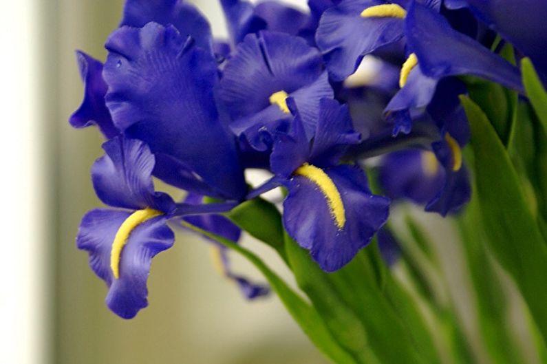 ирисы фото цветов букет земляника азия один