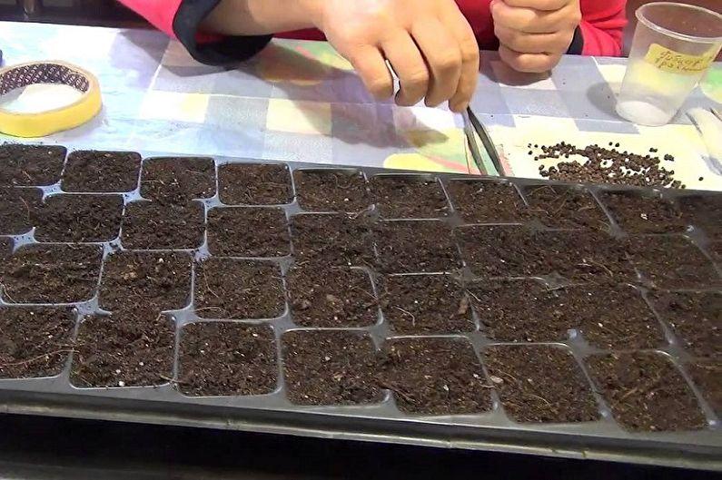Размножение гибискуса семенами