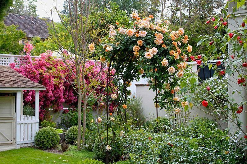 Английская роза - фото