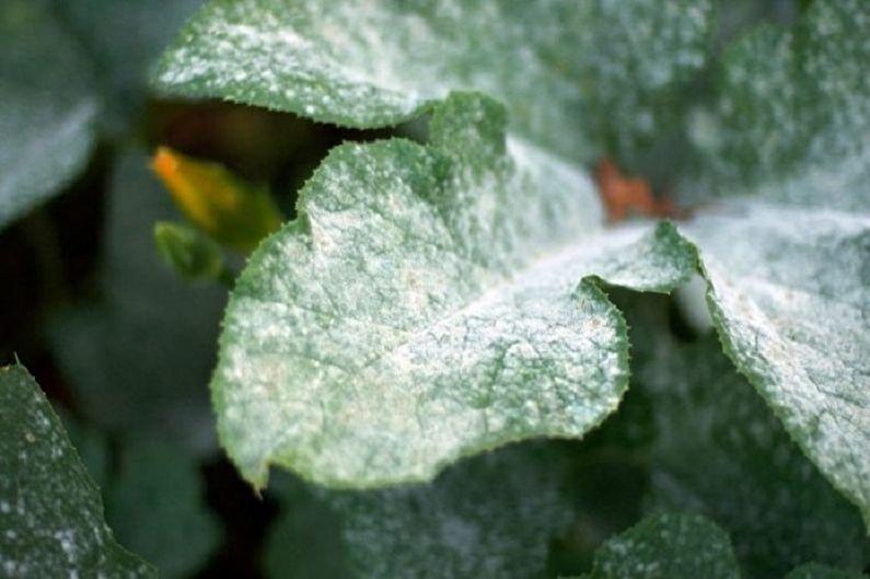 Эустома (лизиантус) - Борьба с болезнями и вредителями