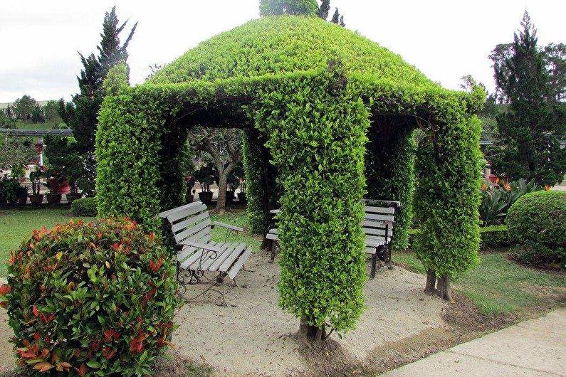Беседки из растений - фото