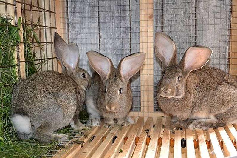 Клетки для кроликов своими руками: все размеры и чертежи