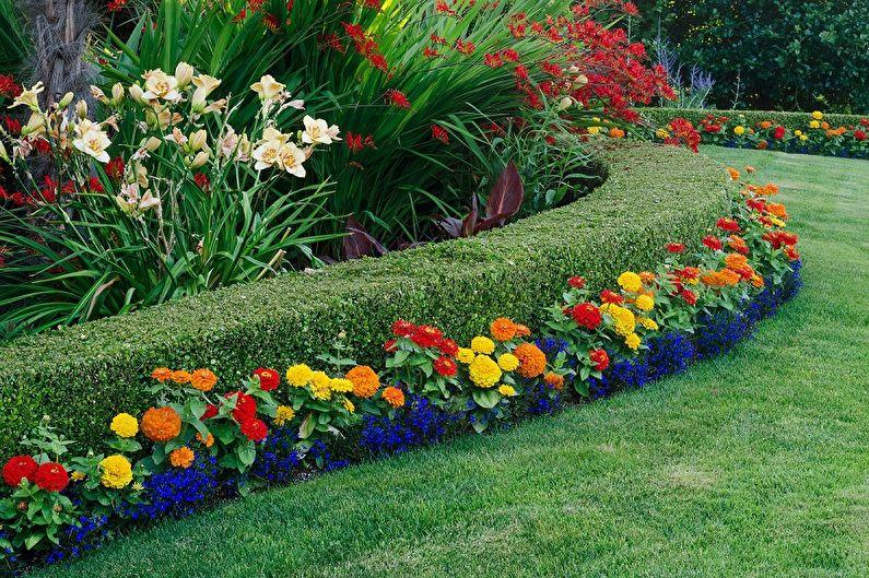 Картинки по запросу многолетние цветы