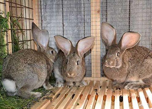 Клетки для кроликов своими руками (70 фото)