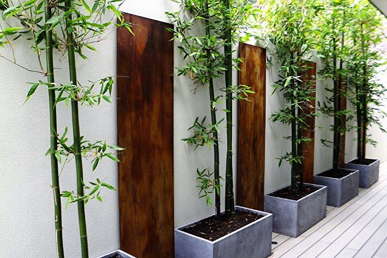 Комнатный бамбук - Основные виды