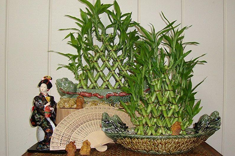 Комнатный бамбук - фото