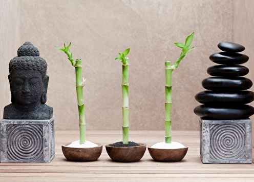 Комнатный бамбук (80 фото): виды и уход