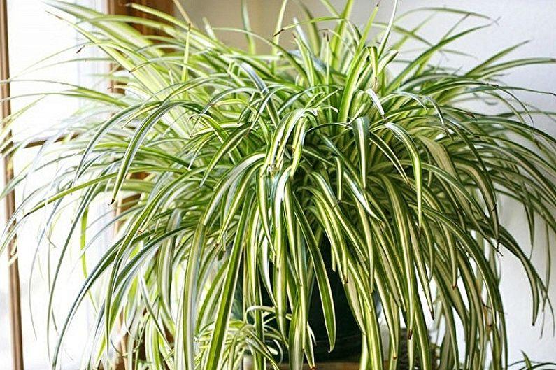 Вертикальное озеленение в интерьере - Какие выбрать растения для интерьера