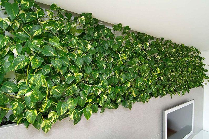 Сциндапсус - Вьющиеся комнатные растения, декоративно-мелколиственные