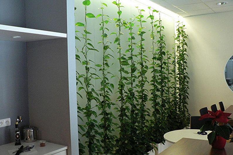 Вьющиеся комнатные растения - Формирование