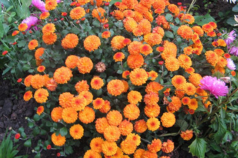 Сорта и фото многолетних садовых цветов