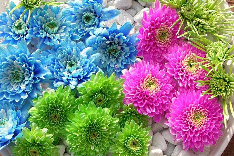 Хризантемы - фото